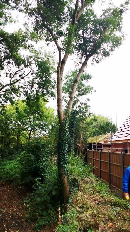 Tree by the Bridge (450x800)