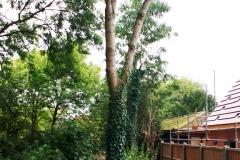Tree by the Bridge
